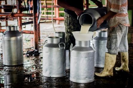 Productores de leche preocupados por baja en las ventas