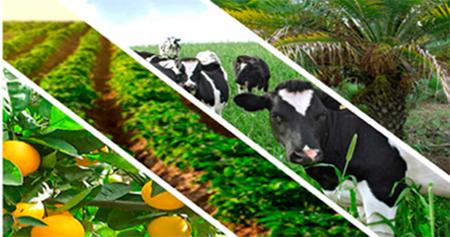 Cámara de Agricultura: El 0,9% de impuesto al patrimonio es la estocada final al sector agrícola
