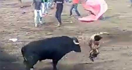 Hombre se debate entre la vida y la muerte tras ser atacado por un toro en Machachi