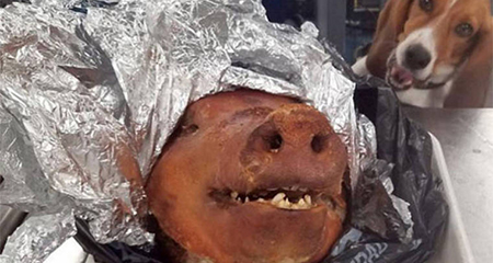 Ecuatoriano causa noticia en Estados Unidos tras hallarse una cabeza de cerdo en su equipaje